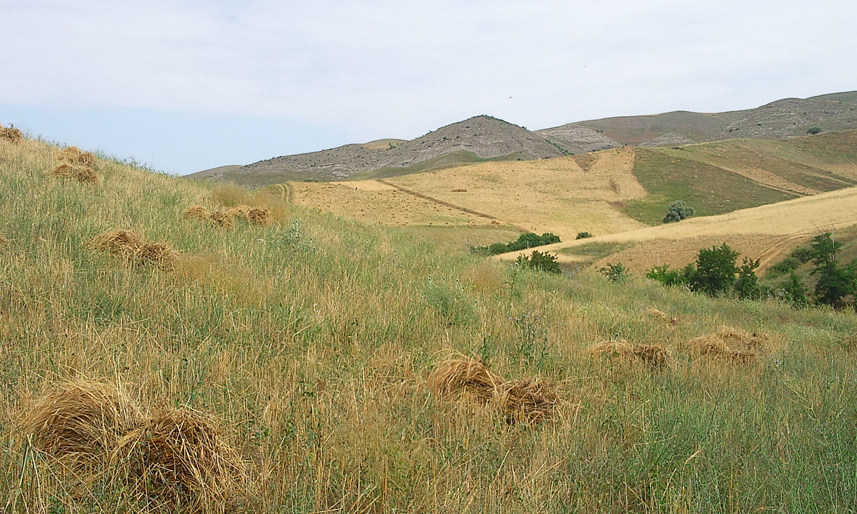 بیچین فصلی لله دره سی
